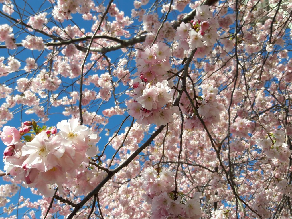 Blühemde Bäume